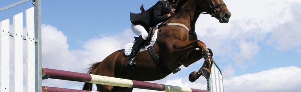 Uluslararası At ve Binicilik Fuarı EQUIST